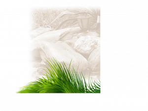 Landscape Grass Stone graphic